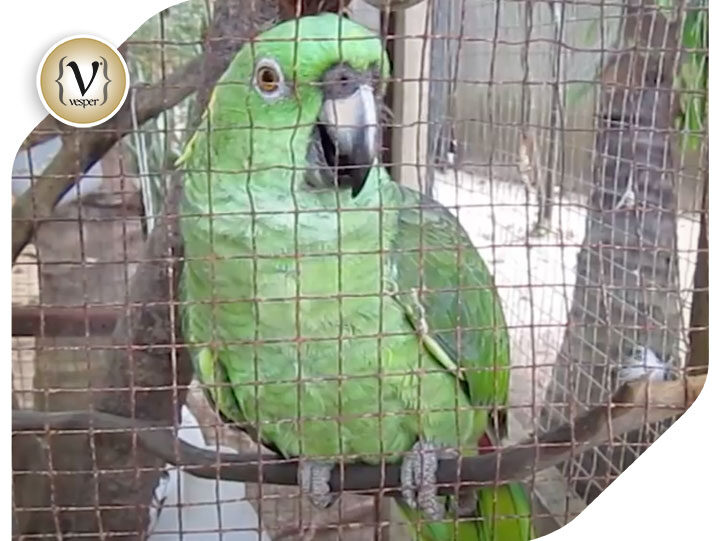 Internet's Best : Parrot that cries like a baby!